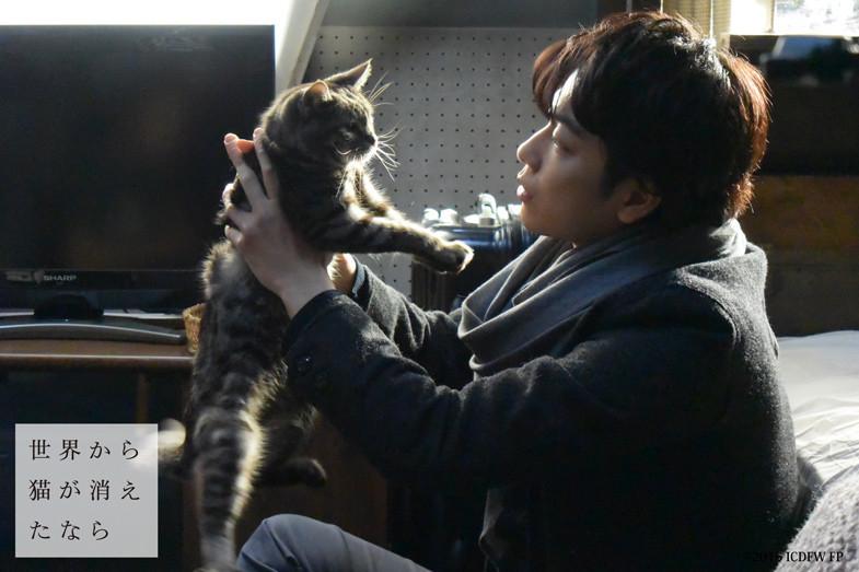 佐藤健と猫の画像